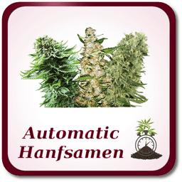 Autoflowering Marihuana Samen
