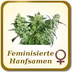 Feminisierte Marihuana Samen