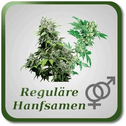 Reguläre Marihuana Samen