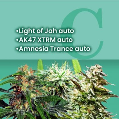 Ams Most Wanted Autoflowering Combo