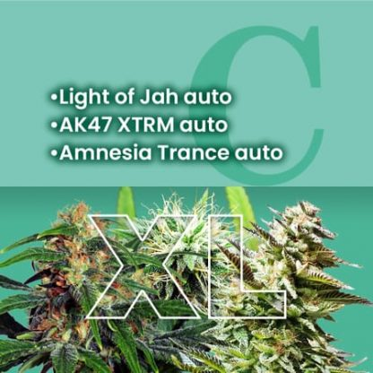 Ams Most Wanted Autoflowering Combo Xl